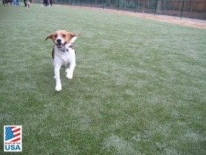 dog-synthetic-grass